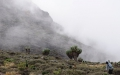 Human-like senecios in the mist create an eery atmosphere.