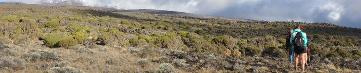 Lemosho Route up Kilimanjaro