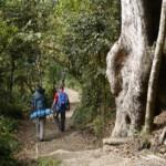 Scenic forest up Kilimanjaro